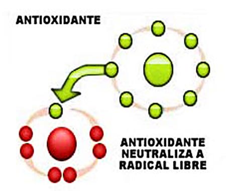 Los antioxidantes - Que alimentos son antioxidantes naturales ...