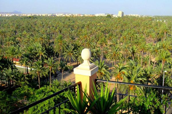 zumo de granada palmeras 600 x 400