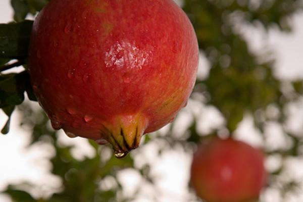 propiedades-de-una-fruta-la-granada600