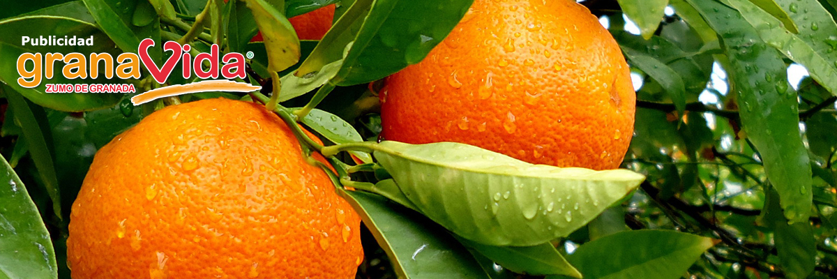 banner-naranjas-campo